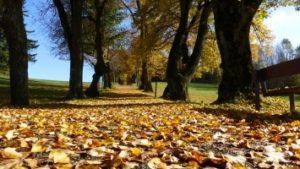 秋に枯れ葉が落ちている公園