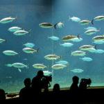 2歳の子どもと葛西臨海公園の水族館(水族園)を楽しむ方法/格安チケット等
