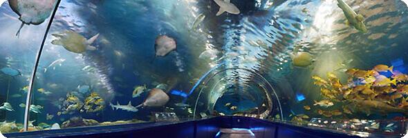 しながわ水族館のトンネル水槽