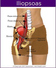 腸腰筋の場所