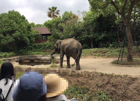 ズーラシア動物園のゾウ
