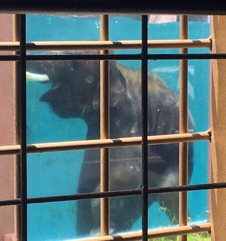 サファリゾーンの水中のゾウ