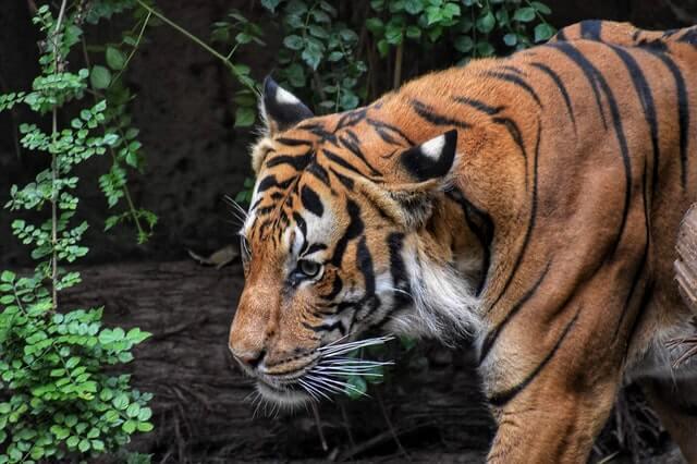 ズーラシア動物園の割引チケット